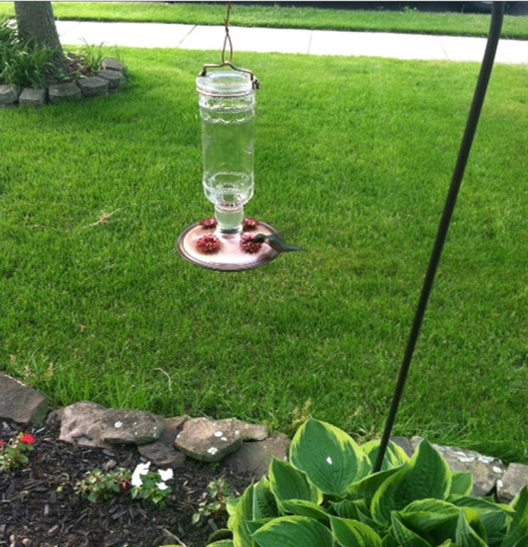 Hummingbird 56