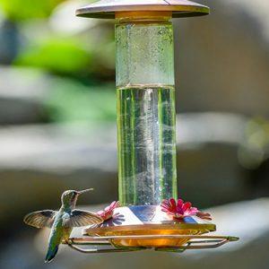 hummingbird-food-recipe-FI