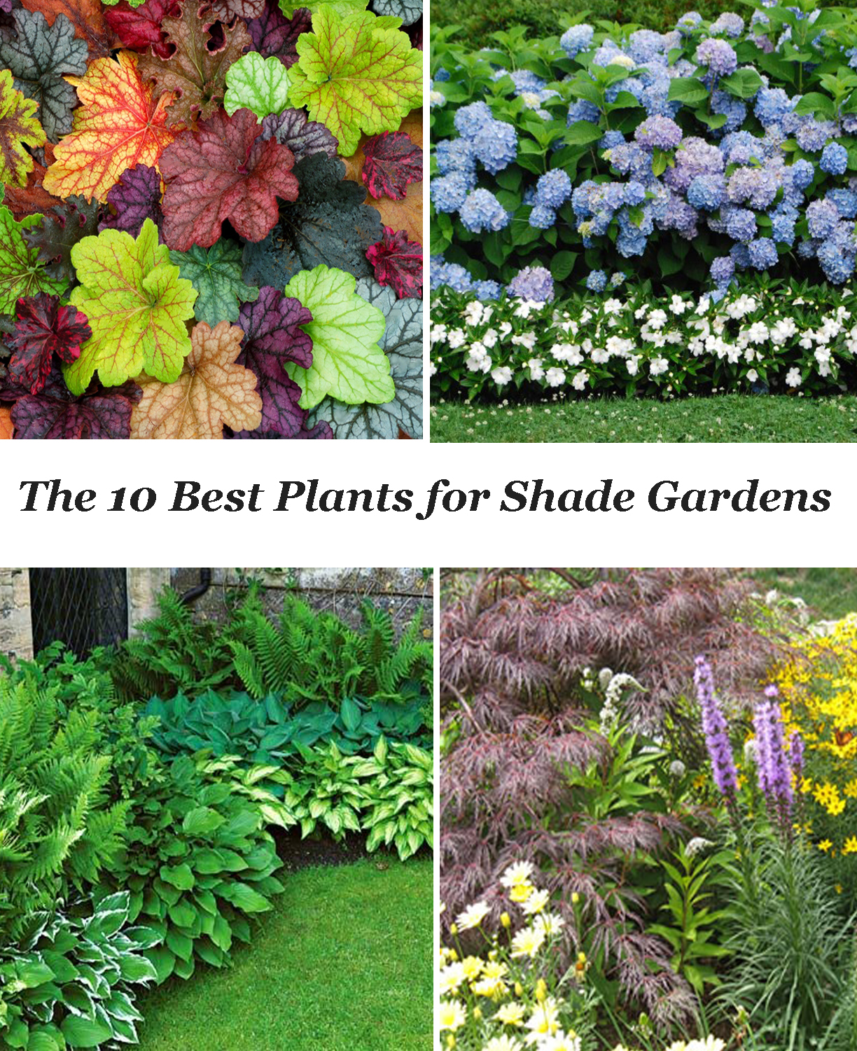 10 best shade garden plants for Landscaping plants