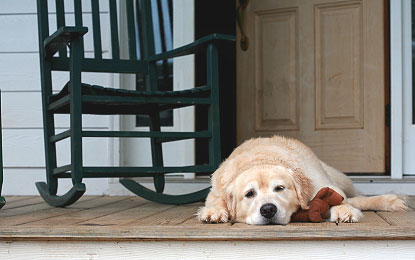 Dog-on-Porch