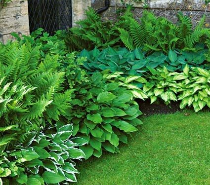 hostas are great shade garden plants that come in a variety of colors