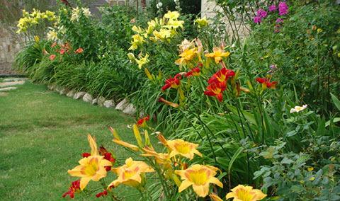 mixed-daylilies-2