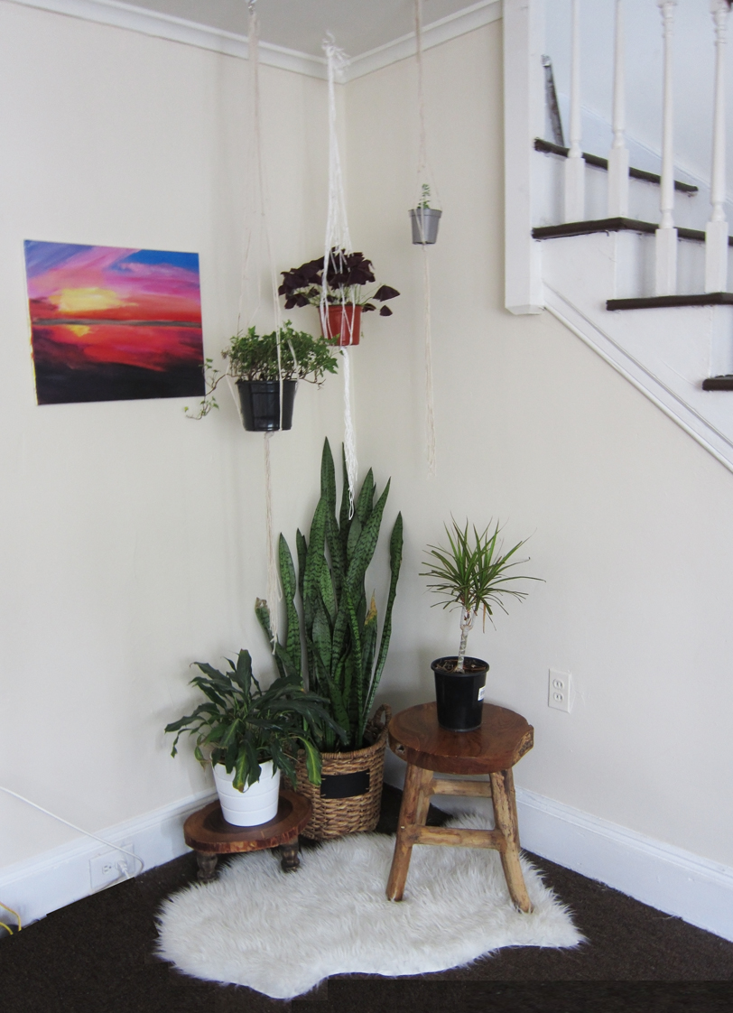 Air purifying plants for bedroom low light www for Best air purifying plants for bedroom