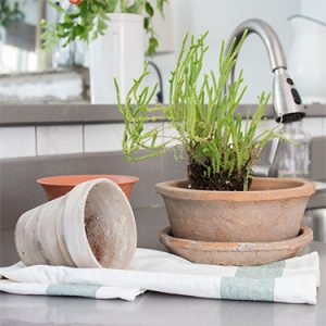 FI-Air-purifying-houseplants