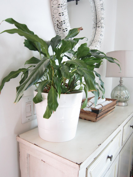the 10 best air purifying house plants the honeycomb home. Black Bedroom Furniture Sets. Home Design Ideas