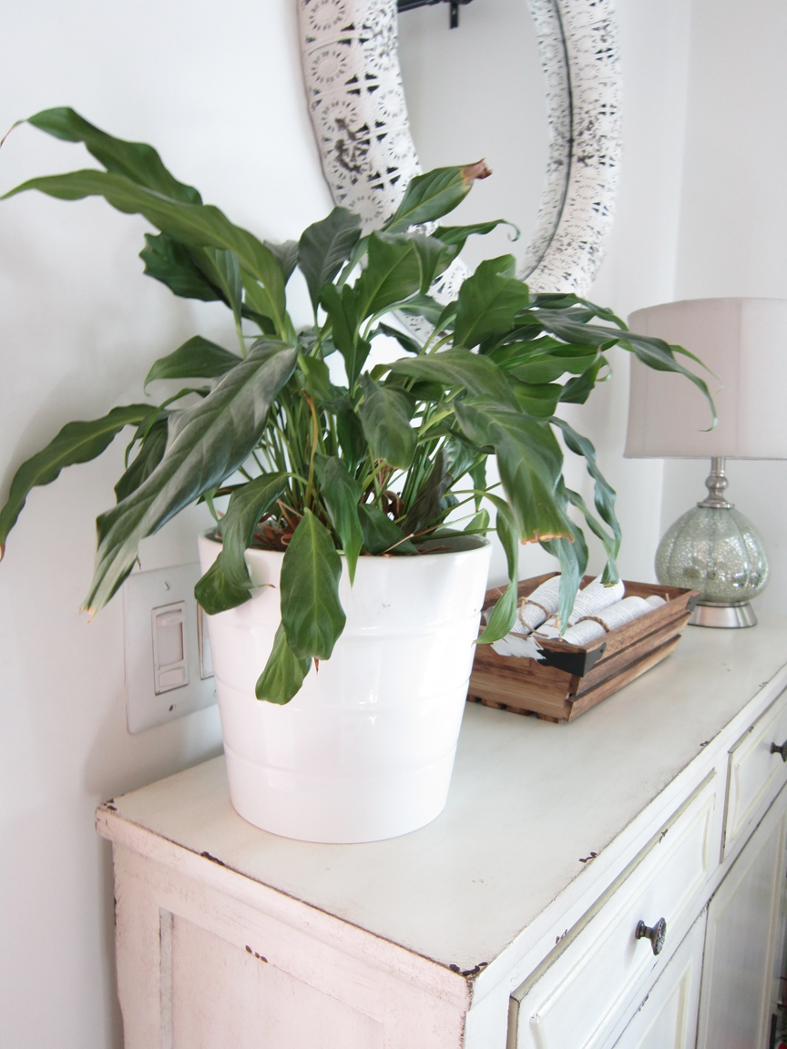 The 10 Best Air Purifying House Plants The Honeycomb Home
