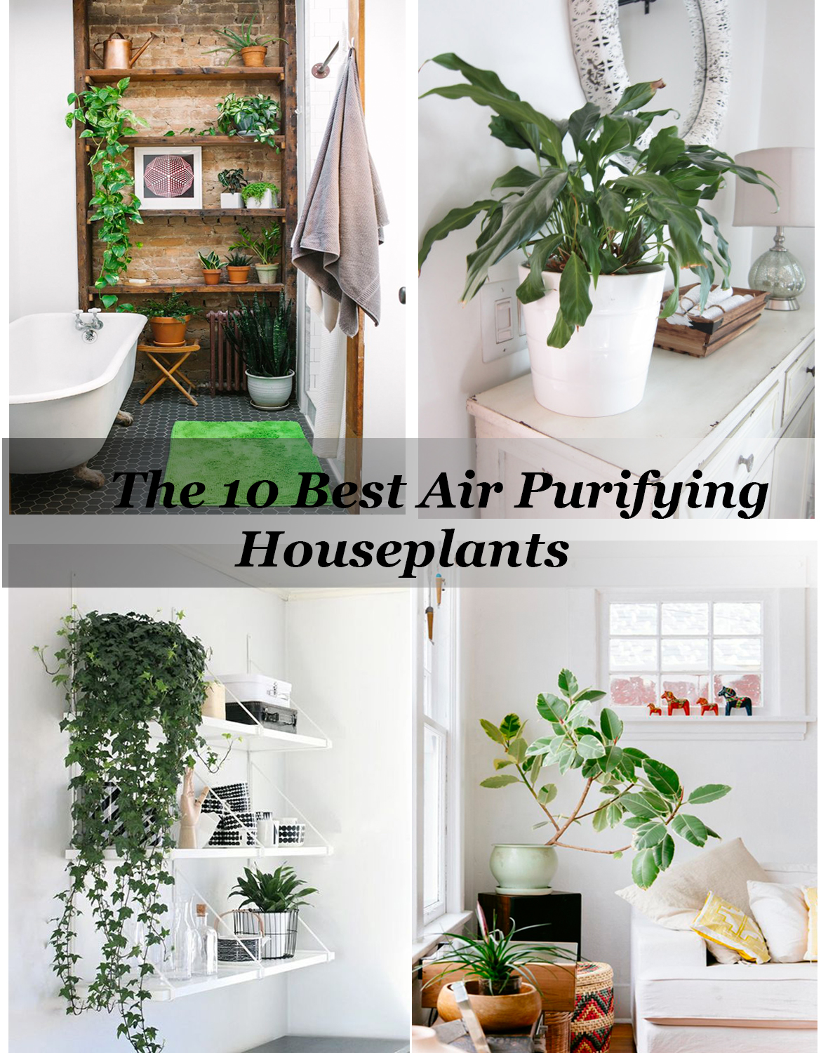 The 10 best air purifying house plants for New home decor products