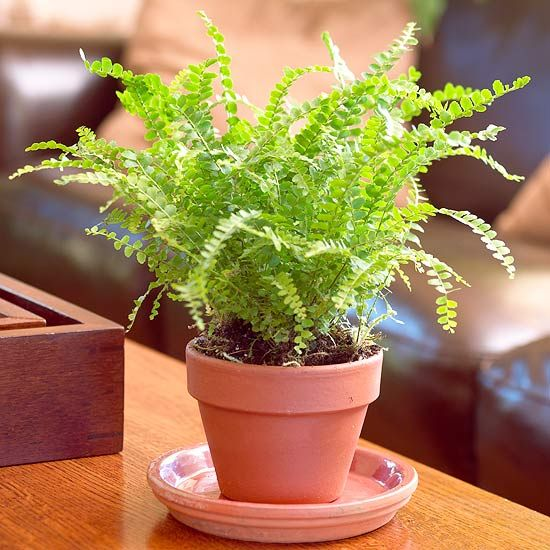 Air Purifying Plants For Bathroom: The 10 Best Air Purifying House Plants