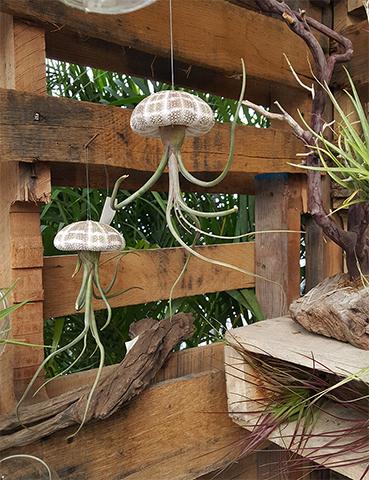 Spring Gardening Ideas