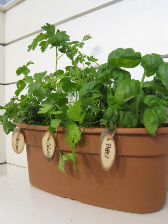 Start your herb gardens indoors