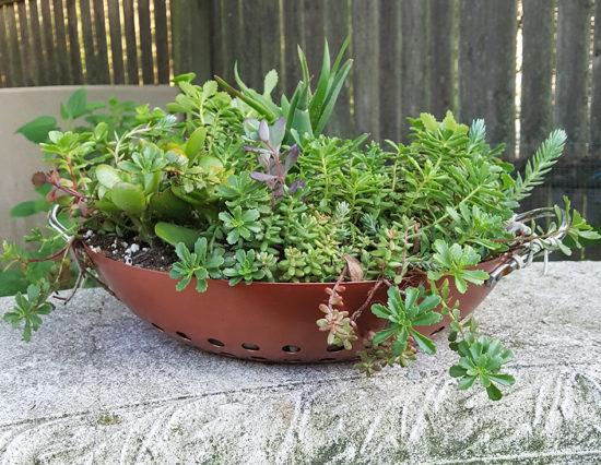 DIY Hanging Succulent Container Garden