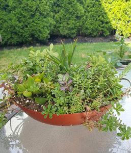 Hanging Succulent Container Garden