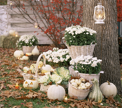 Fall Decorating with Whites