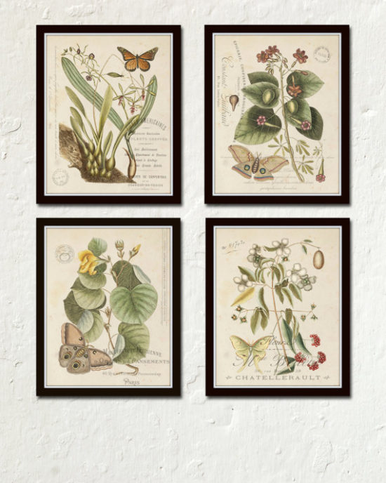 set-of-botanical-wall-art-pictures
