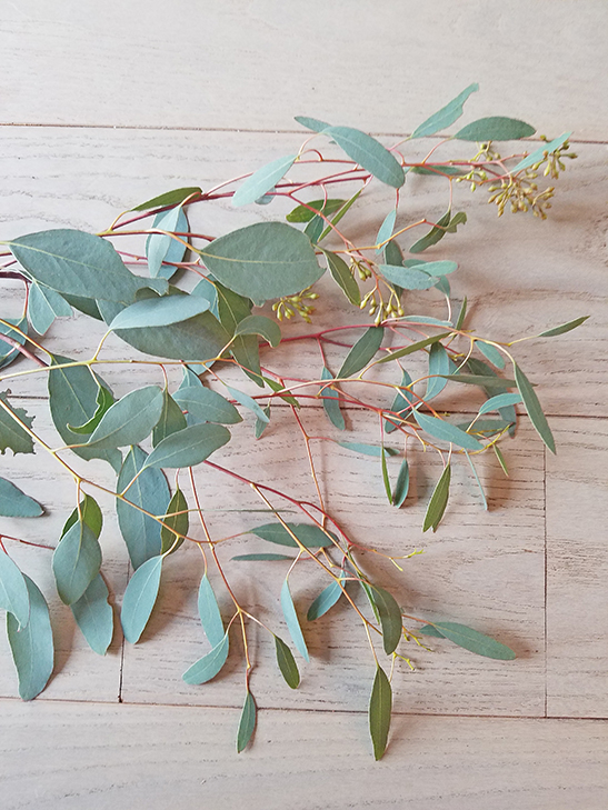 seeded eucalptus