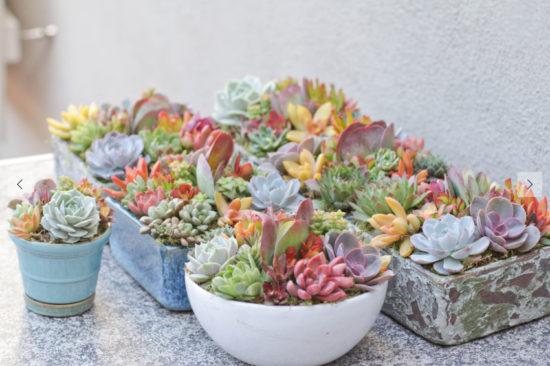 Spring Succulents Spring DIY Ideas