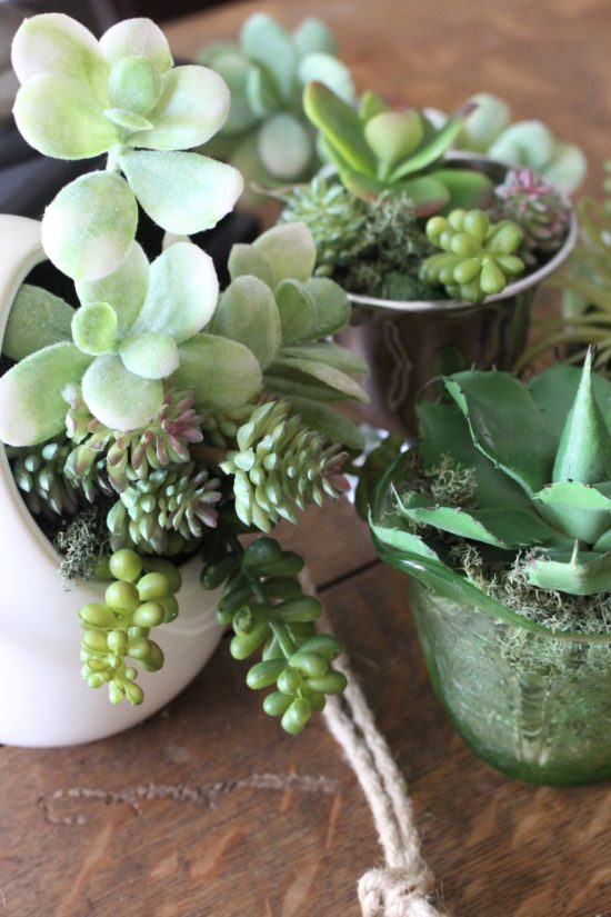 succulents centerpiece