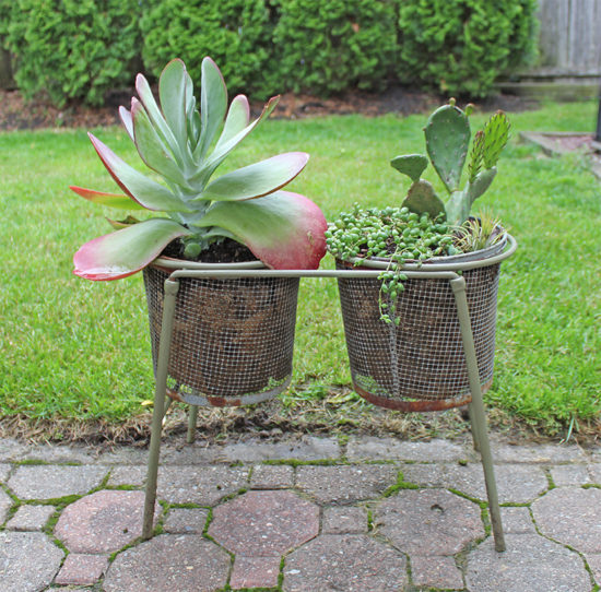 Giant succulent killie pot planter