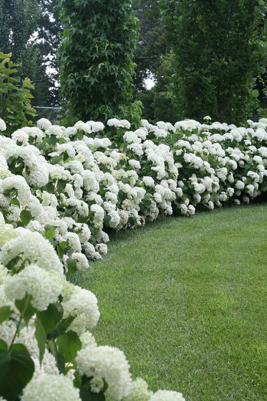 white hydrangea garden outdoor spaces