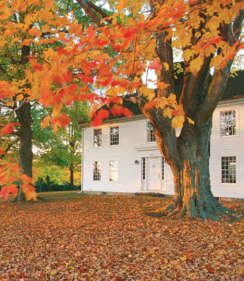 11 Fresh Ideas For Fall Gardens
