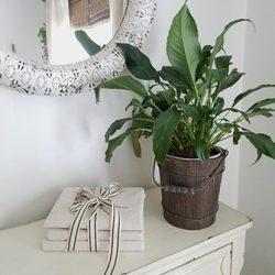 Houseplants FI2