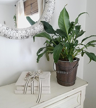 My Favorite Indoor Plants