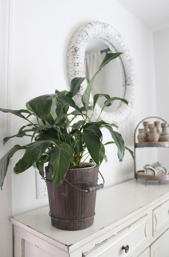 the best indoor plants, Houseplants Peace Lily Air Purifying 2