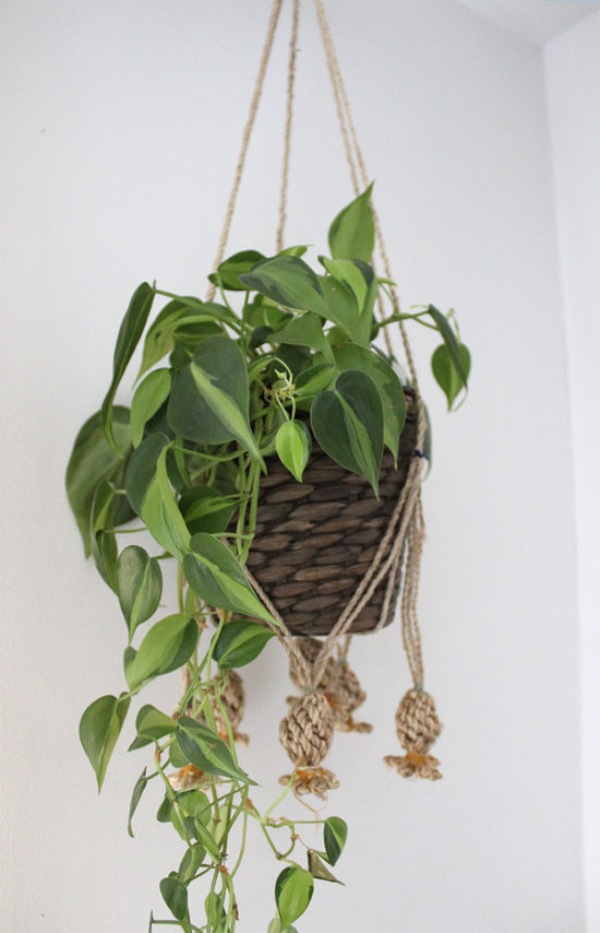 hanging plants, indoor plants