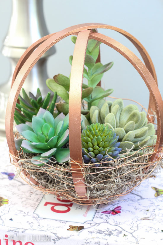 succulent-diy-terrarium-using wooden hoop