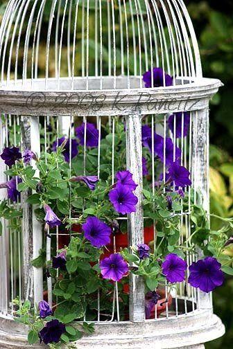 vintage bird cage garden