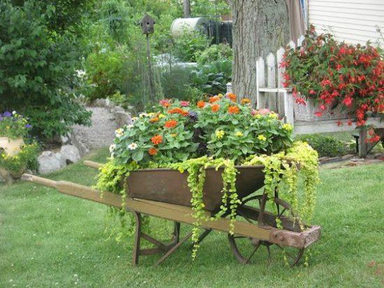 wheel barrel in the garden