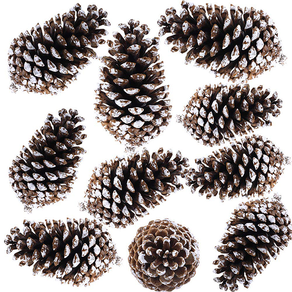 snow tipped pine cones, Christmas decorating