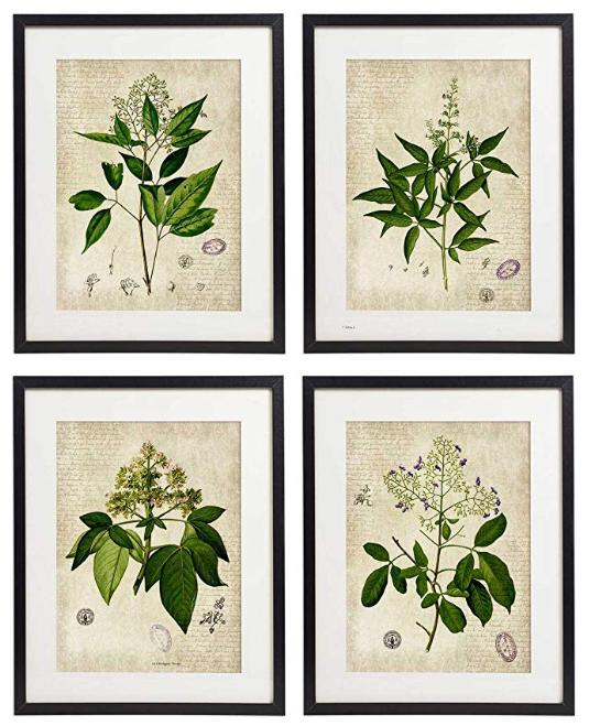 set of 4 botanical prints under $25