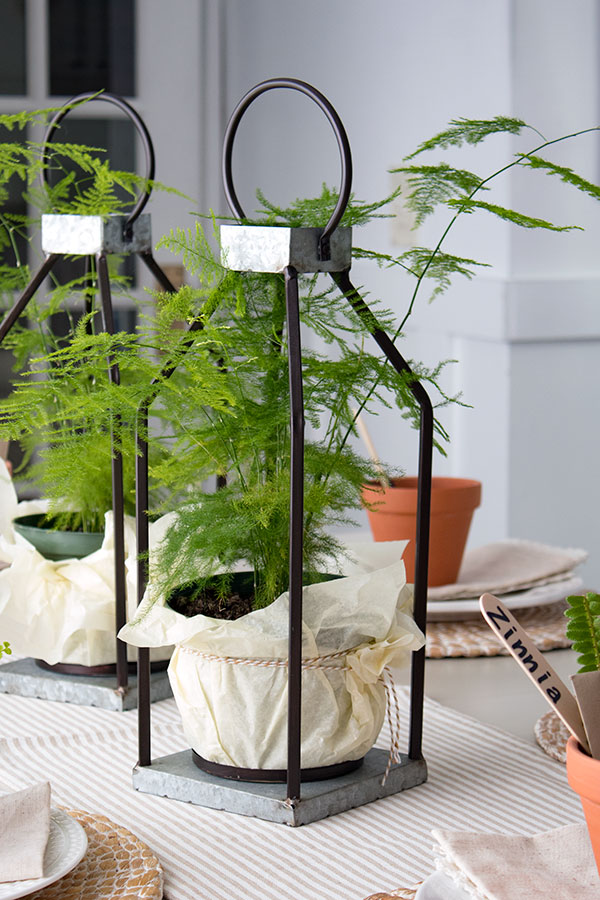 Centerpiece for your Spring-Table-with-asparagus-fern-plants