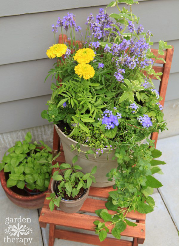 mosquito repelling container garden recipe