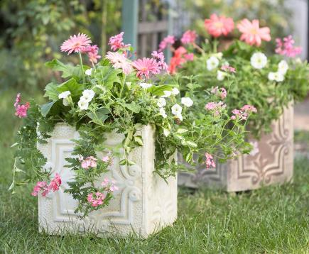 container garden plant combinations