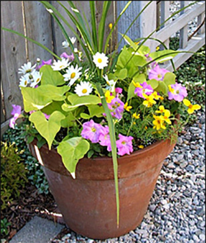 container garden recipe ideas
