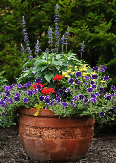 full sun container garden flower mix