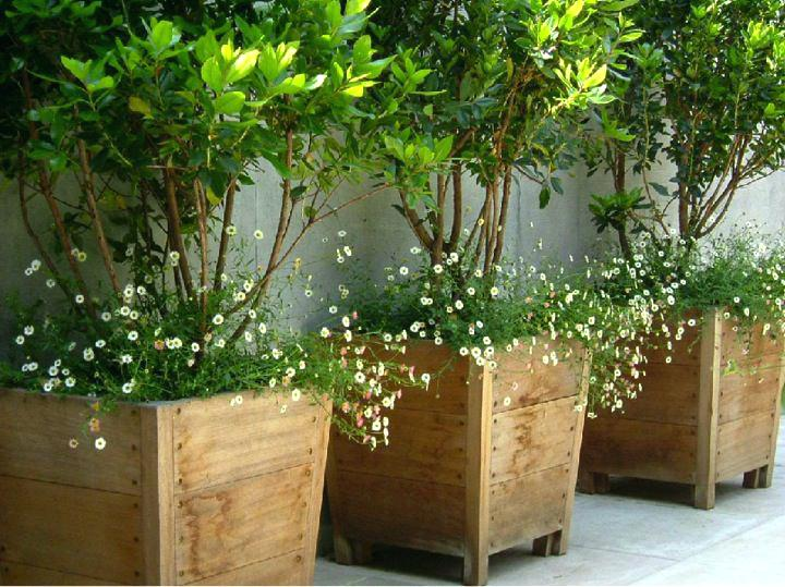 beautiful container garden display