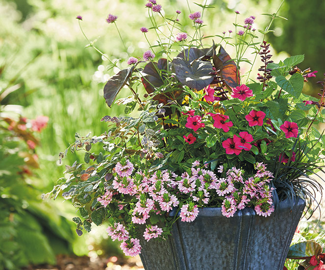 container garden recipes