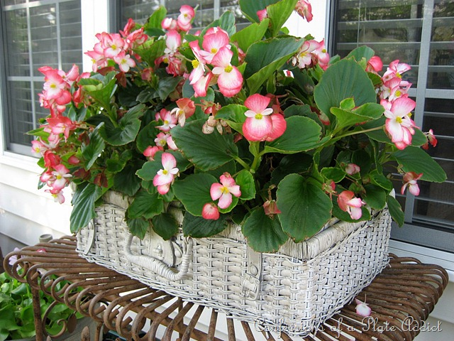 picnic basket planter