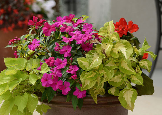 shade flower combinations for container gardens