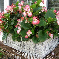 Creative-garden-planters-FI