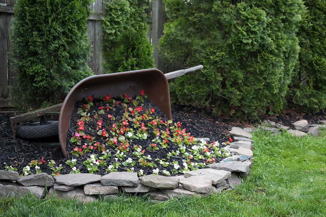 DIY Wheelbarrow planter, backyard ideas