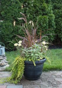 FI-Full-Sun-container-garden-flowers