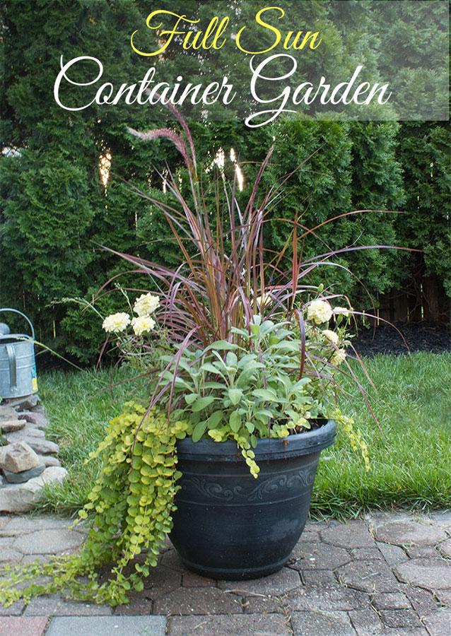 Full Sun container garden ideas, the article lists the mix of flowers and herbs used here.