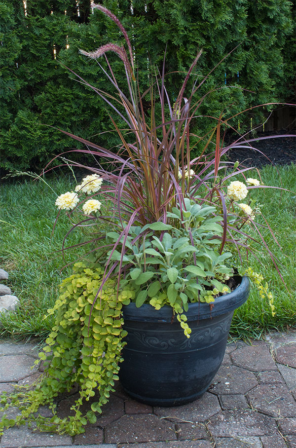 container gardening planters for full sun