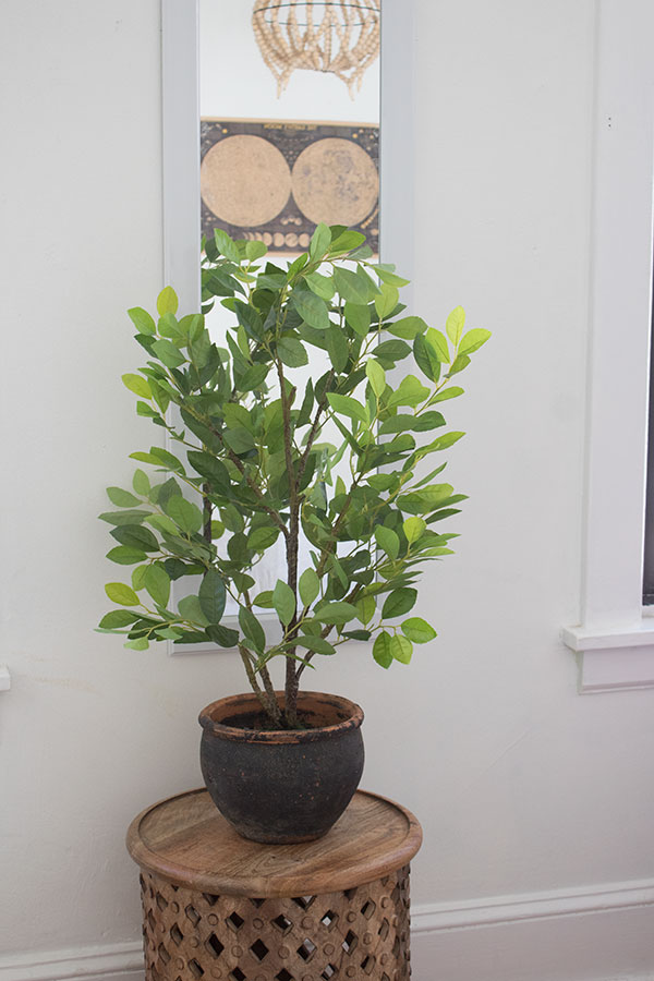 Beautiful artificial ficus tree