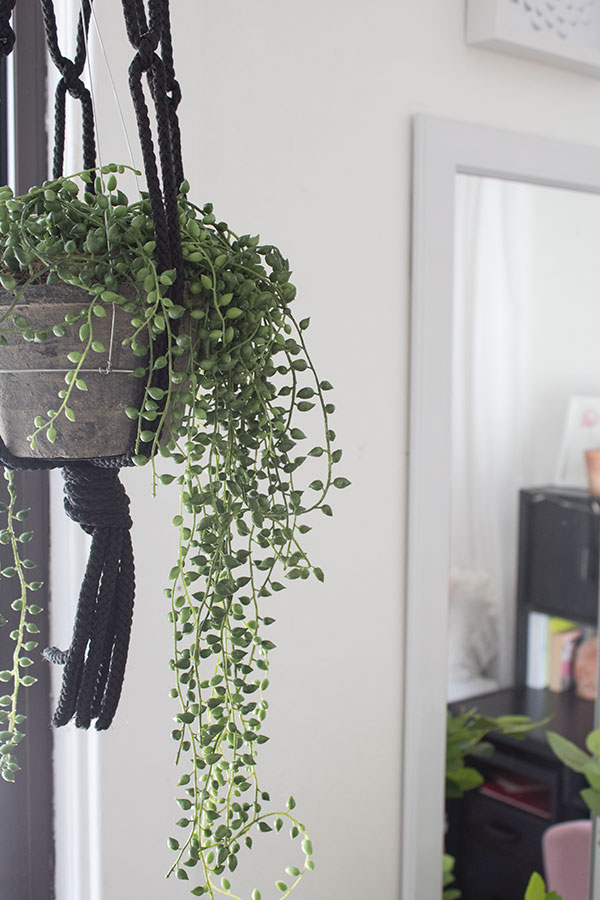 hanging succulent pearl plant