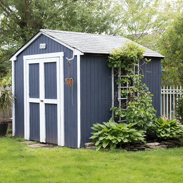 blue painted shed with climbing vines
